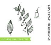 polygonatum odoratum   siberian ...   Shutterstock .eps vector #342537296