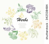 vector background with herbs in ... | Shutterstock .eps vector #342538484