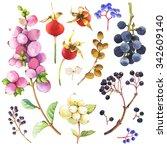 watercolor botanical... | Shutterstock . vector #342609140