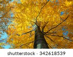 Colorful Autumn Tree In Forest...