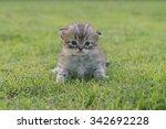 Stock photo cute kitten on the green grass 342692228