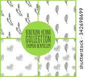 thymus serpyllum   siberian... | Shutterstock .eps vector #342698699
