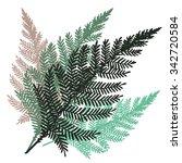vector fern set hand drawn...   Shutterstock .eps vector #342720584