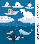 arctic animals character and... | Shutterstock .eps vector #342767720