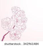 cherry flowers in line art... | Shutterstock . vector #342961484