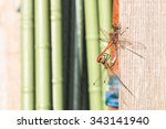 two  little dragonfly  playing ... | Shutterstock . vector #343141940