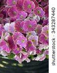 itatiba  sp  brazil   august 30 ... | Shutterstock . vector #343287440