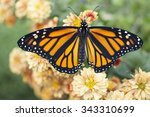 Stock photo butterfly 343310699