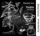 nettle  botanical drawing.... | Shutterstock .eps vector #343319006