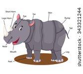 illustrator of rhinoceros body...   Shutterstock .eps vector #343321244