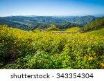tree marigold  mexican... | Shutterstock . vector #343354304