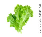 Salad Leaf. Lettuce Isolated O...
