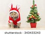 Sad Christmas Cat Dressing Up...