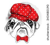 Portrait Dog Pug In Red Cap An...