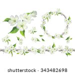 blossoming branch of apple tree.... | Shutterstock .eps vector #343482698