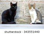 Cute Cats In Istanbul  Turkey.