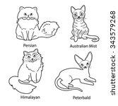 set of cartoon cats black and... | Shutterstock .eps vector #343579268