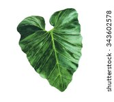 big painted tropical leaf on... | Shutterstock . vector #343602578