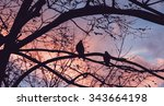 Silhouettes Of Two Doves...