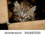 Stock photo cute cat 343682030