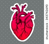 anatomical heart   vector... | Shutterstock .eps vector #343742690