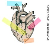 anatomical abstract heart  ... | Shutterstock .eps vector #343742693