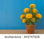 Blooming Yellow Marigold In Pot.