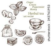 lemon  mint  ginger   . hand... | Shutterstock .eps vector #343761953