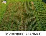 crops seen from the birdseye... | Shutterstock . vector #34378285