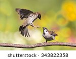 Two Sparrows Fight With...