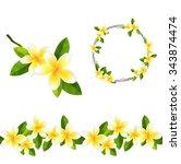 Blossoming Branch Of Frangipan...