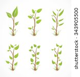 plant collection   illustration | Shutterstock .eps vector #343905500
