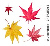 maple leaves autumn set | Shutterstock . vector #343925066