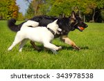 german shepherd playing with a... | Shutterstock . vector #343978538