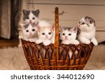 Stock photo five cute kittens in braided bascket looking at camera 344012690