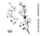 vector hand drawn stems of... | Shutterstock .eps vector #344044244