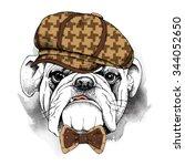 portrait of a bulldog in brown... | Shutterstock .eps vector #344052650