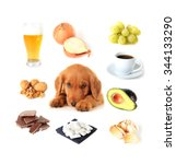 chart of toxic foods for dogs....