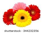beautiful gerbera flowers... | Shutterstock . vector #344232356