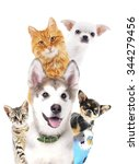 cute pets isolated on white | Shutterstock . vector #344279456