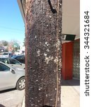 Telephone Pole With Hundreds O...