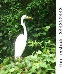 A beautiful egret posing. Mt. Dora Canal, Florida