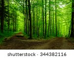 forest path with two options | Shutterstock . vector #344382116