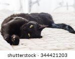 Stock photo playful cat with black hair lying on bed 344421203