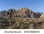 Joshua Tree And Mountain Peaks...
