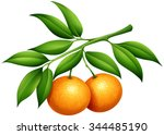 Oranges With Stem And Leaves...