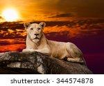 White Lion. Portrait Of Liones...