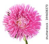 aster flower head closeup... | Shutterstock . vector #344608370