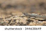 three eyed plated lizard head... | Shutterstock . vector #344638649