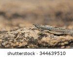 madagascar lizard close up... | Shutterstock . vector #344639510
